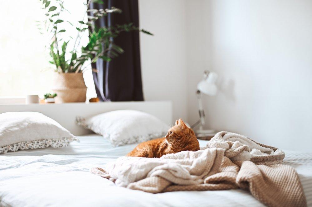 Sånn finner du riktig seng til ditt behov